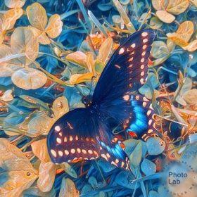 Vick Lavender - Mi Sailda [Sophisticado]
