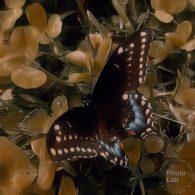 Vick Lavender - SOLAR (The Universe Speaks To Me) [Sophisticado]